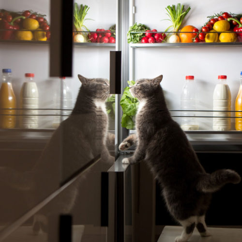 cat_looking_in_fridge